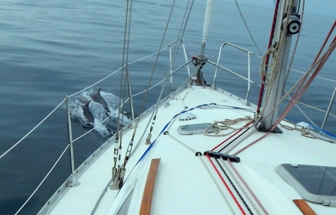 dolphins on bow