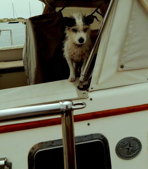 Tom's Dog